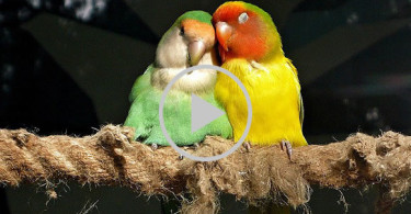 Amazing-Birds-Love